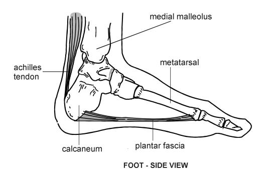 foot sideview   diagram   patienti  l jpg