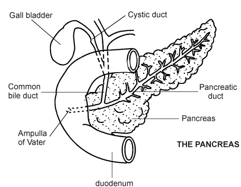 Gallbladder Pain Location Diagram on waist pain location diagram