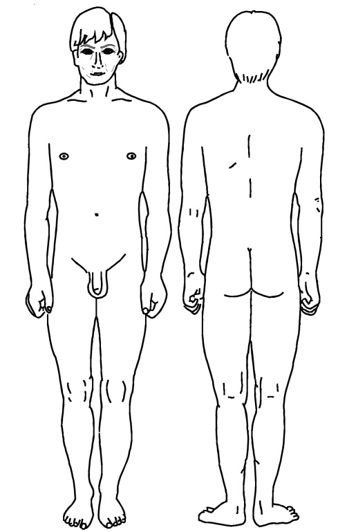 male front and rear view diagram patient : male diagram - findchart.co