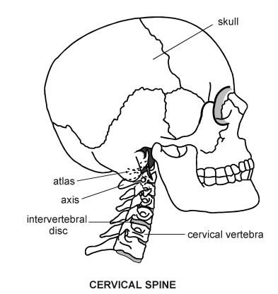 cervical spine diagram patient : cervical spine diagram - findchart.co