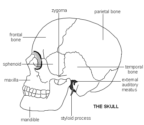 skull diagram patient : diagram of skull - findchart.co